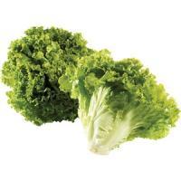 insalata gentile